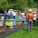 Beekeepers and colorful hive boxes