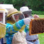 Beekeepers Examining a Frame of Honey Bees