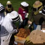 Beekeeping in the Pacific Northwest – West Sound Beekeepers