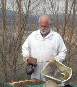 Jim Bach working the bees