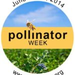 Pollinator Protection Week – 2014