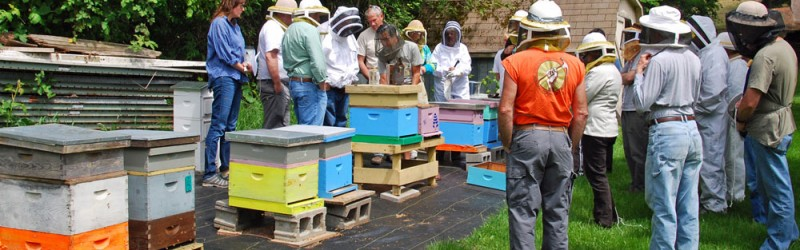 Beekeeping Class in Kitsap County