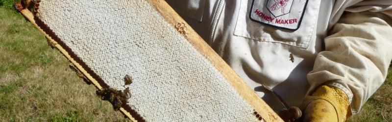Beautiful Frame of Honey