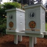 Olympia Beekeepers Association installs Honey bee colonies at the Governor's Mansion
